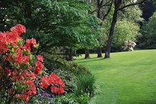 Grass - We do landscaping, irrigation, and gardening. Located in Myrtle Beach, South Carolina.